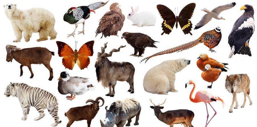 animaux à découper